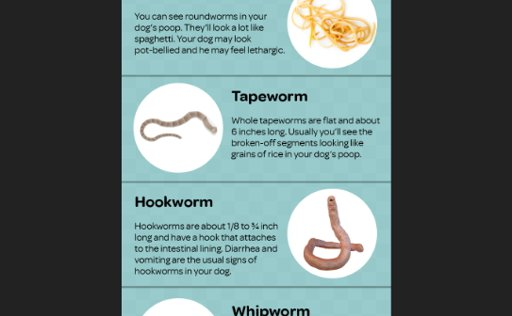 Quora] how come puppies get worms | SweetPuppies Amino