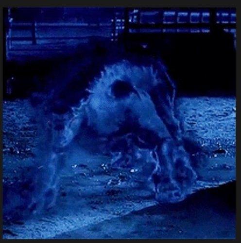 hellhound | Supernatural Amino