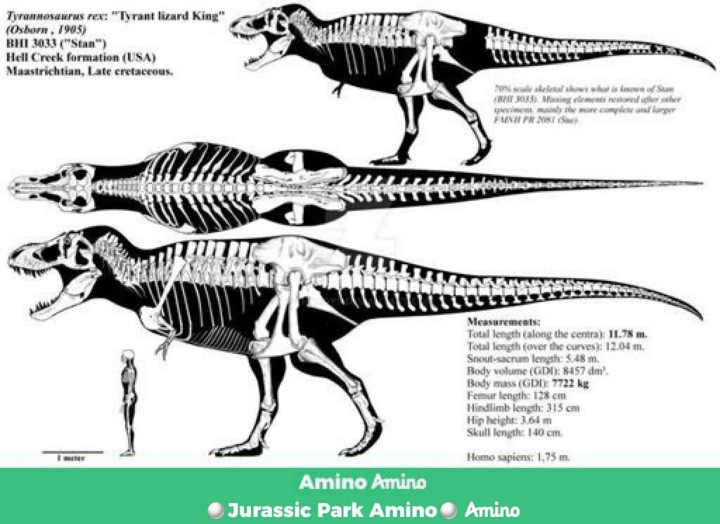 Mamut Vs Tyrannosaurus Rex Batalla De Titanes Jurassic Park Amino Amino Los mamuts no habitaron la tierra hace tanto como los dinosaurios.se estima a partir de hallazgos fósiles entre todas las especies de mamuts, coincidentemente la más conocida, el lanudo, era la. mamut vs tyrannosaurus rex batalla de