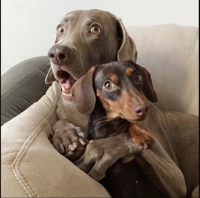 movie monster dog cast