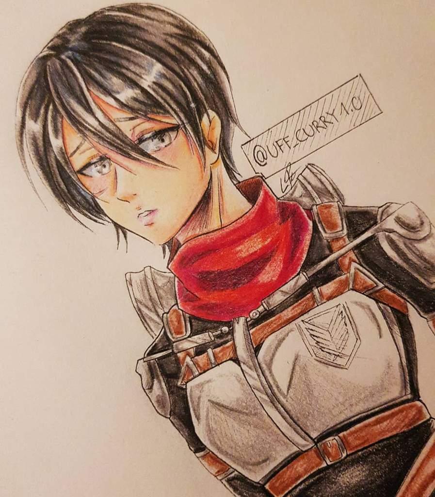 19 Years Old Mikasa Attack On Titan Amino