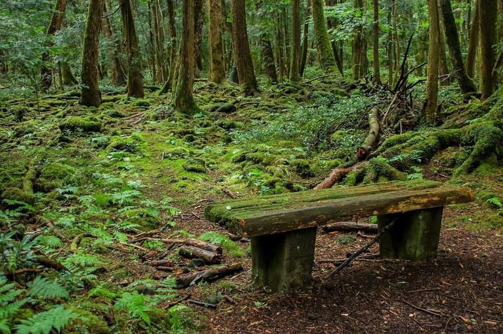 современной лес в японии аокигахара фото надо пройти несколько