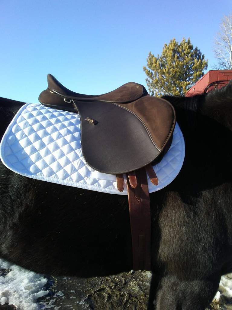English saddle? | Equestrian Amino