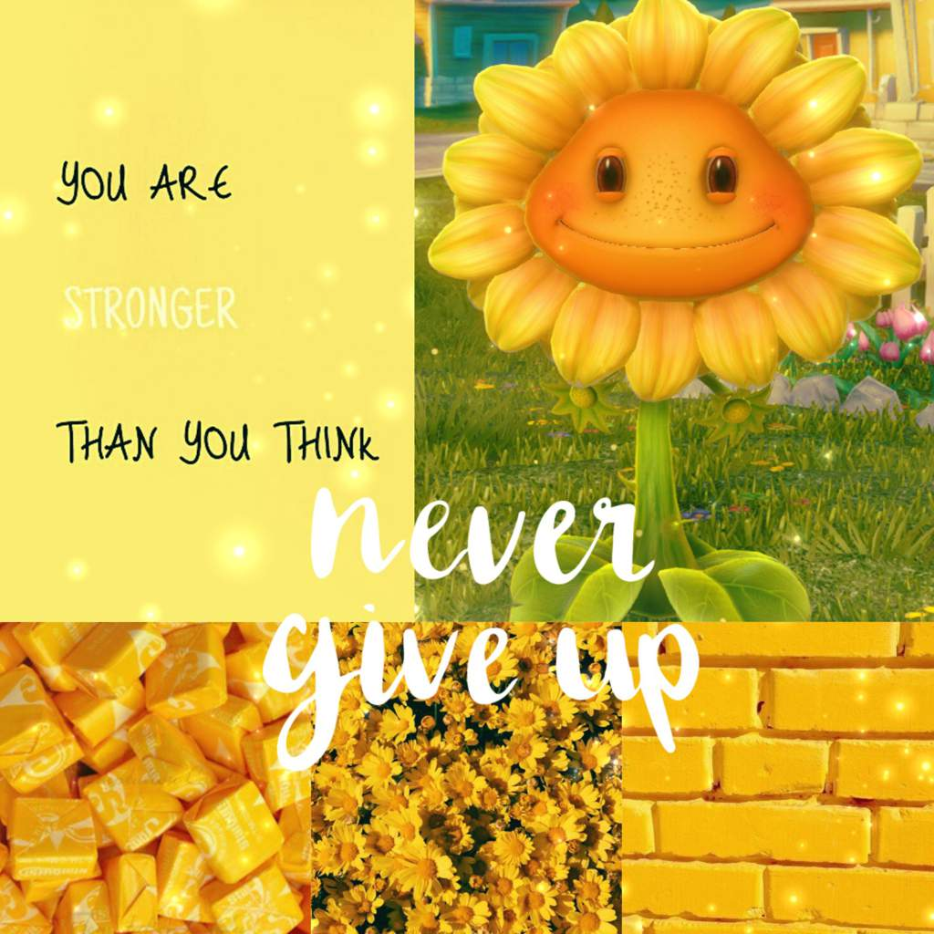 Sunflower Aesthetic   PvZ: Garden Warfare 2 Amino