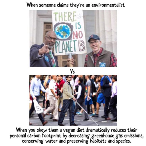 environment | Vegan Amino