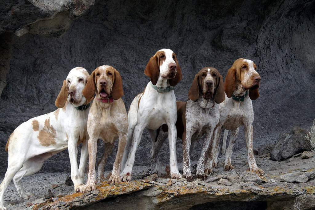Собаки в картинках италии