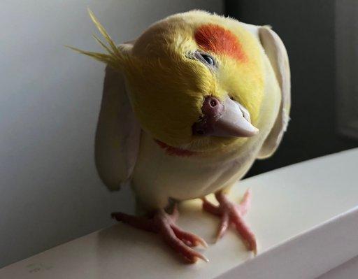 Help | Birds Amino Amino