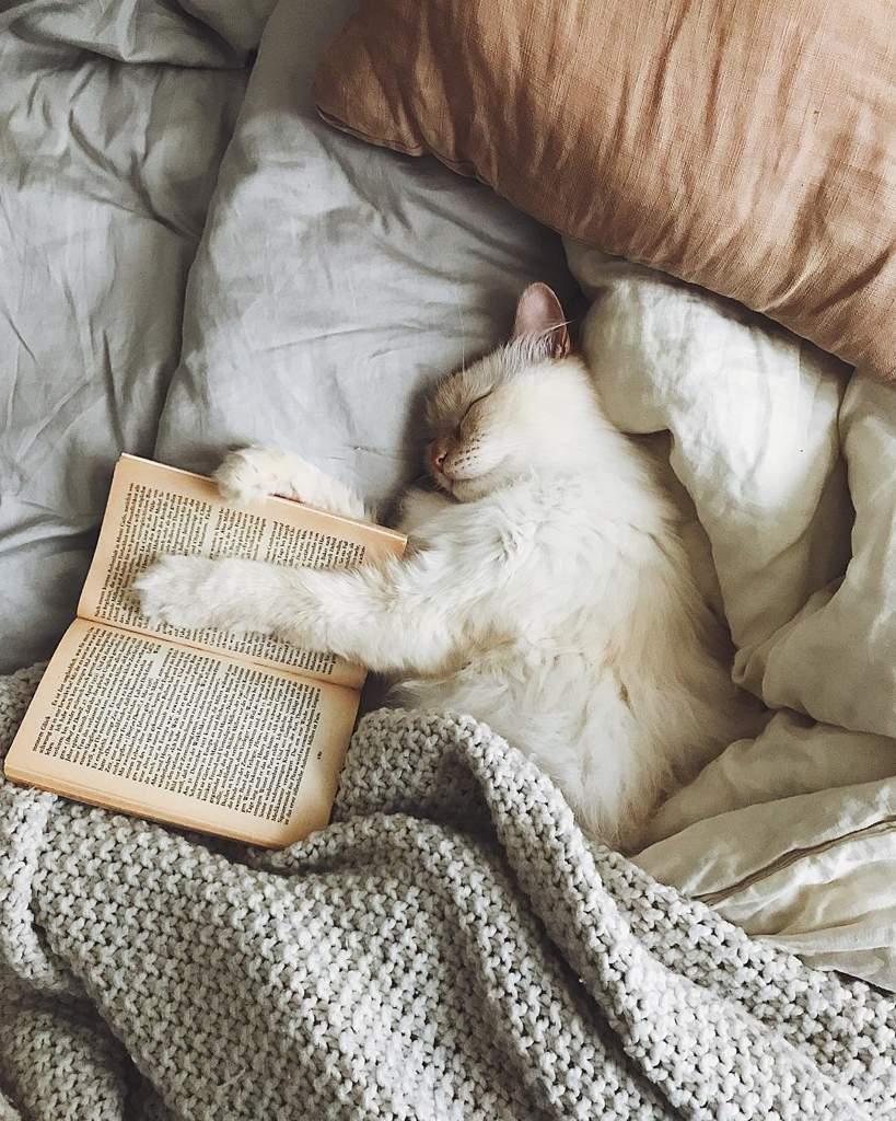 Картинки утро котики