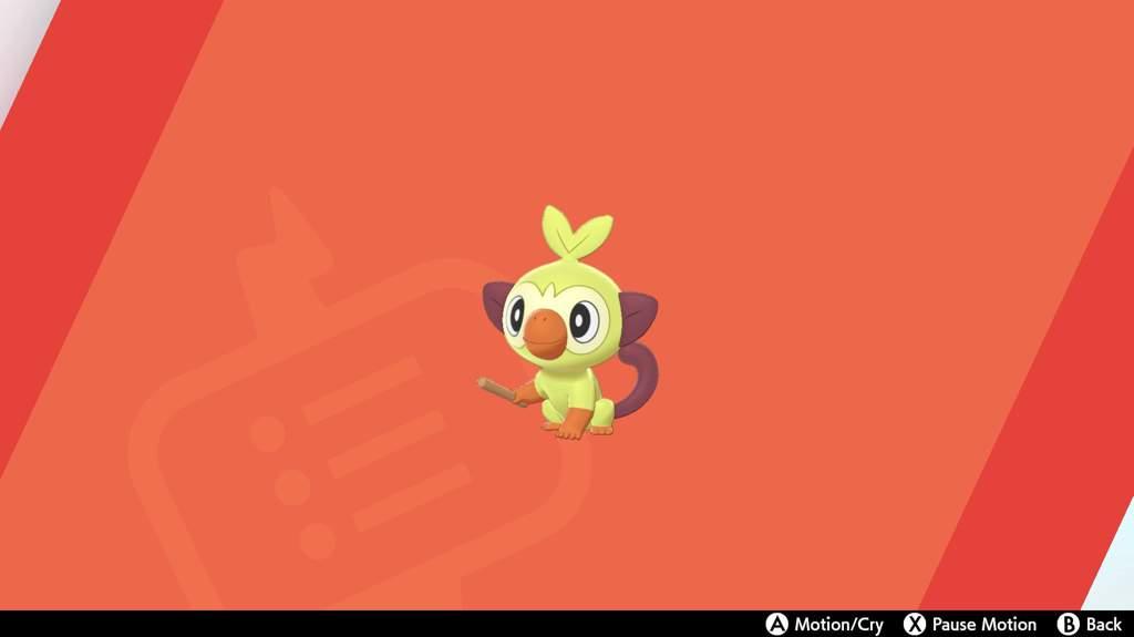 Shiny Grookey No Spoilers Pokemon Amino Read on for information on its evolutions, abilities, type advantages, and more. shiny grookey no spoilers pokemon amino