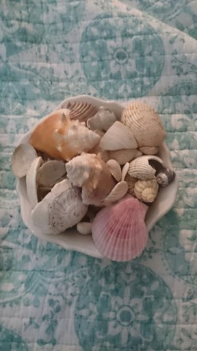 Seashells Pagans Witches Amino Discover over 725 of our best selection of 1 on. amino apps
