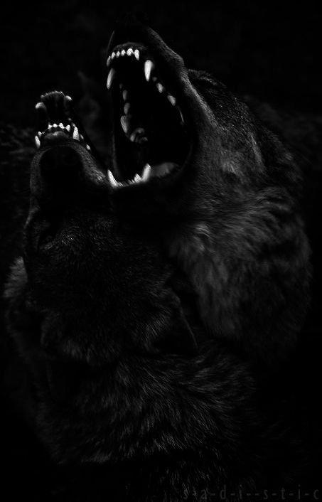 Shadow | ༴ Wolf Pack RP Amino ༴ Amino